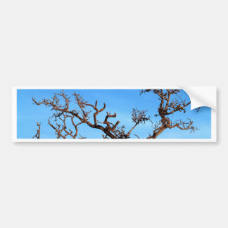 dead tree bumper sticker