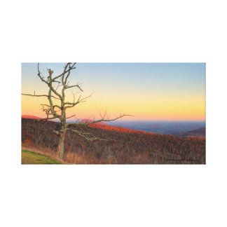 Dead tree in Blue Ridge mountains at sunset Canvas Print