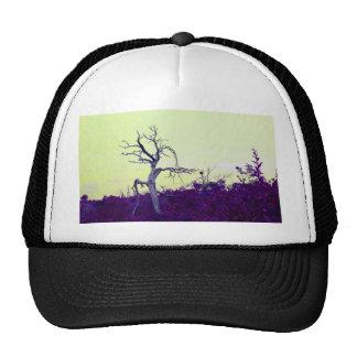 dead tree purple yellow leaves sky cap