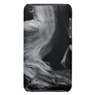 Dead tree trunk iPod touch cover