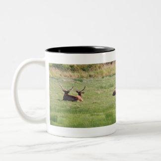 Dean Creek, Oregon Bull Elk Mugs