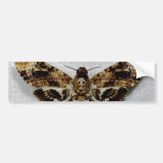 Death s Head Hawkmoth Acherontia Lachesis Bumper Sticker
