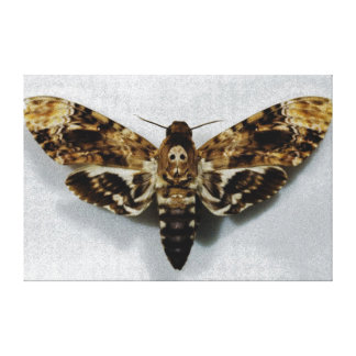 Death s Head Hawkmoth Acherontia Lachesis Gallery Wrapped Canvas