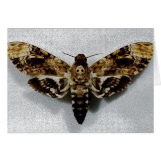 Death s Head Hawkmoth Acherontia Lachesis Card