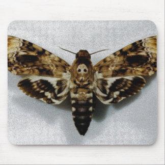 Death s Head Hawkmoth Acherontia Lachesis Mousepad