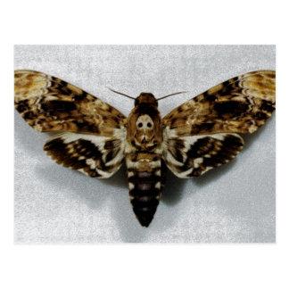 Death s Head Hawkmoth Acherontia Lachesis Post Card