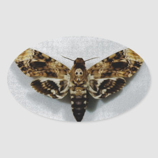 Death s Head Hawkmoth Acherontia Lachesis Oval Stickers