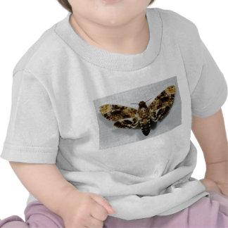 Death s Head Hawkmoth Acherontia Lachesis T Shirt