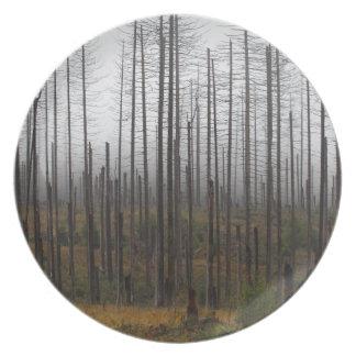 Death spruce trees dinner plates