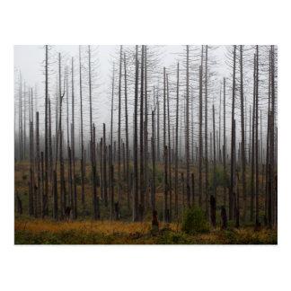 Death spruce trees postcard