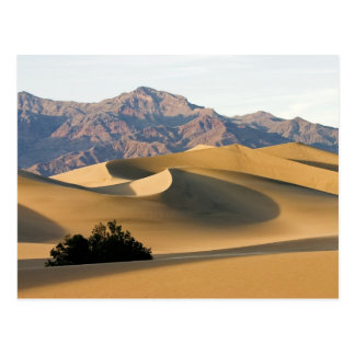 Death Valley Sand Dunes... Postcard