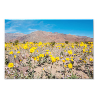 Death Valley Wildflowers Photo Print