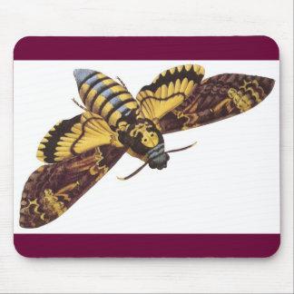 Death's Head Hawk Moth Mouse Pad