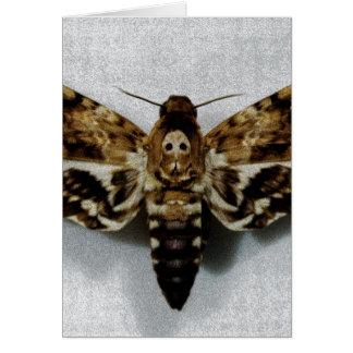Death's Head Hawkmoth Acherontia Lachesis Card