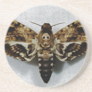 Death's Head Hawkmoth Acherontia Lachesis Coaster
