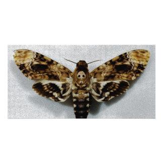 Death's Head Hawkmoth Acherontia Lachesis Customized Photo Card