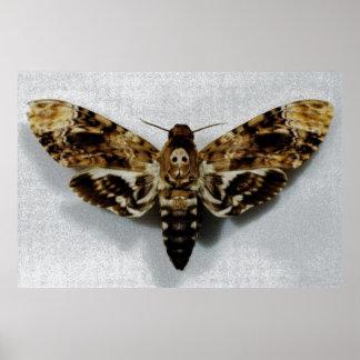 Death's Head Hawkmoth Acherontia Lachesis Poster