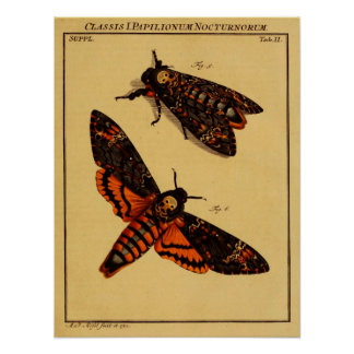 Death's Head Moth Poster