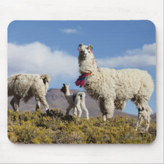 Decorated lama herd in the Puna, Andes mountains 3 Mouse Pad
