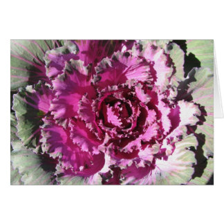 Decorative Cabbage Card