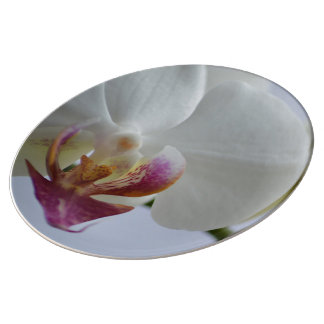Decorative plate porcelain plates
