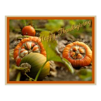 Decorative pumpkins postcard