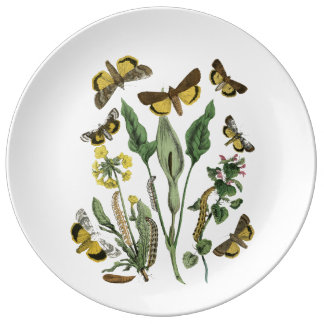Decorative Vintage Moth and Butterfly Nature Plate