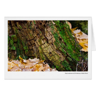 Deep autumn at Frontenac State Park Card