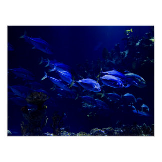 Deep Blue Undersea Tropical Fish Poster