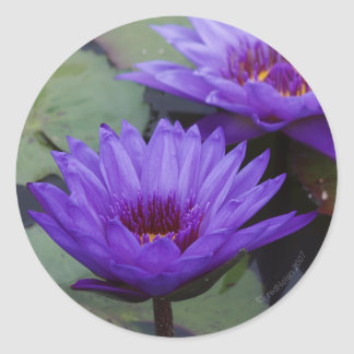 Deep Blue Water Lily Sticker