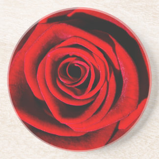 Deep in a Red Rose Beverage Coaster