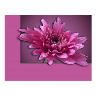 Deep Pink Daisy Post Card