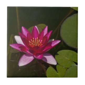 DEEP PINK LOTUS BLOSSOM AND LILY PADS IN POND TILE