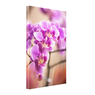 Deep Pink Phalaenopsis Orchid Flower Chain Canvas Print