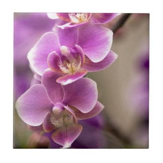 Deep Pink Phalaenopsis Orchid Flower Chain Ceramic Tile
