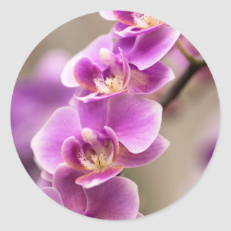 Deep Pink Phalaenopsis Orchid Flower Chain Classic Round Sticker