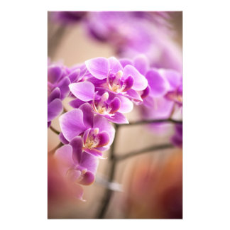 Deep Pink Phalaenopsis Orchid Flower Chain Flyer