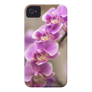 Deep Pink Phalaenopsis Orchid Flower Chain iPhone 4 Case
