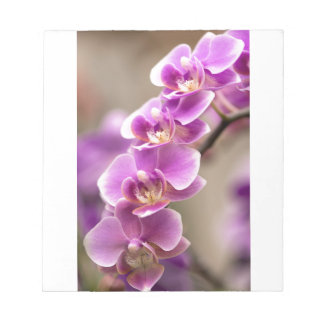 Deep Pink Phalaenopsis Orchid Flower Chain Notepad