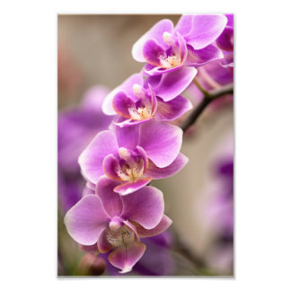 Deep Pink Phalaenopsis Orchid Flower Chain Photo