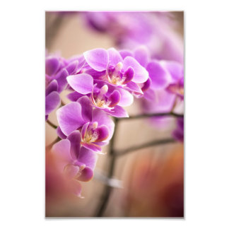 Deep Pink Phalaenopsis Orchid Flower Chain Photographic Print
