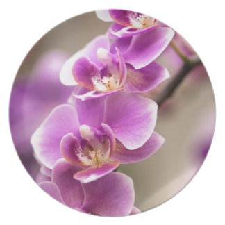 Deep Pink Phalaenopsis Orchid Flower Chain Plate