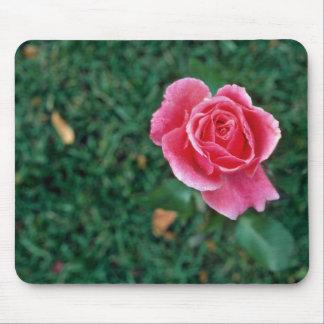 Deep Pink Rose flowers Mousepads