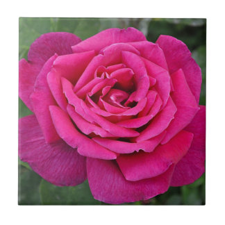Deep pink single rose small square tile