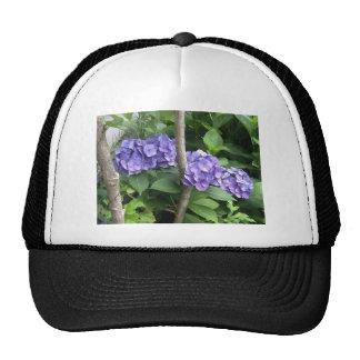 Deep Purple Hydrangeas Cap