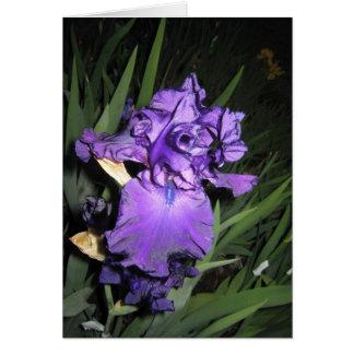 Deep Purple Iris At Dusk Greeting Cards