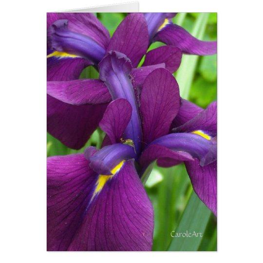 Deep Purple Irises Card