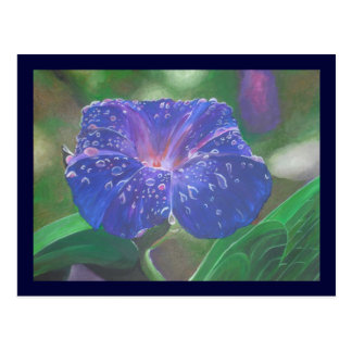 Deep Purple Morning Glory With Morning Dew Postcard