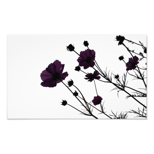 Deep Purple Photograph