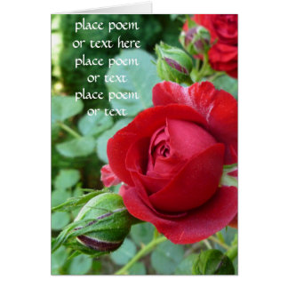 Deep red rose bud card